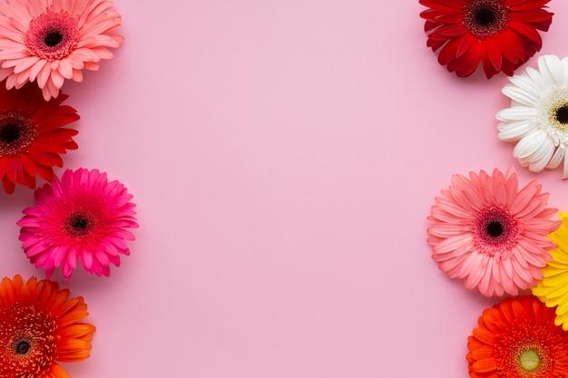 Copie espace fond rose avec des marguerites gerbera