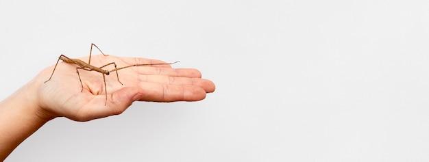 Copie-espace main avec insecte