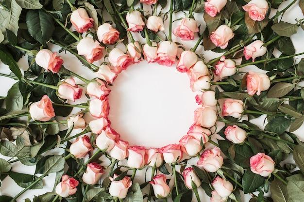 Copiez le cadre de l'espace de fleurs roses roses sur blanc