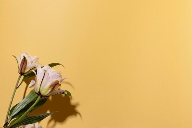 Copiez l'espace fleurs épanouies