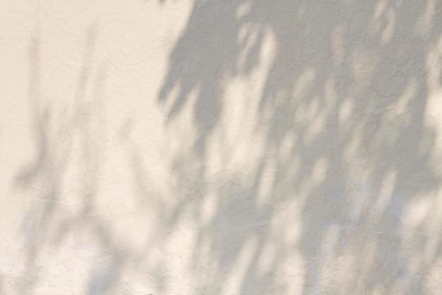 Copiez le mur de béton blanc de l'espace avec des ombres