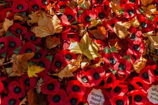 Coquelicots du jour du souvenir et feuilles d'automne.
