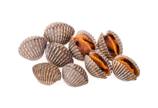 Coques de fruits de mer sur mur blanc