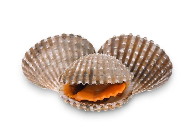 Coques de fruits de mer