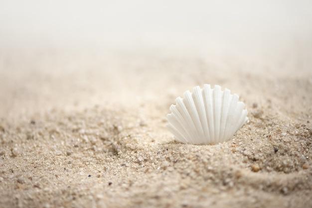 Coquillage blanc sur fond marin d'été de plage de sable
