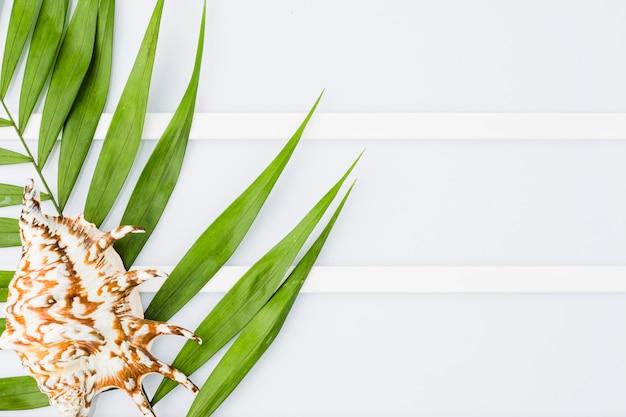 Coquillage et feuilles de plantes à bord