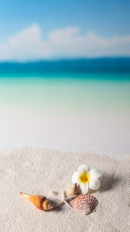 Coquillage et fleur au bord de la mer