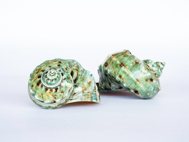 Coquillage isolé sur une surface blanche. belle forme naturelle de coquillage.