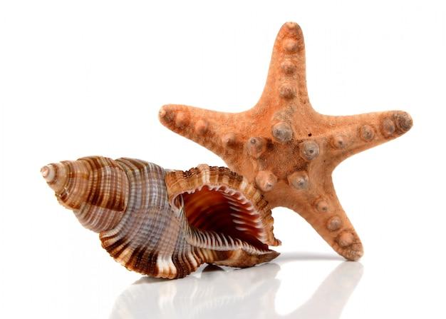 Coquillage marin