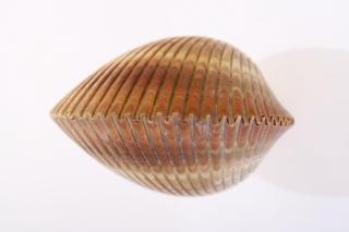 Coquillage de mer
