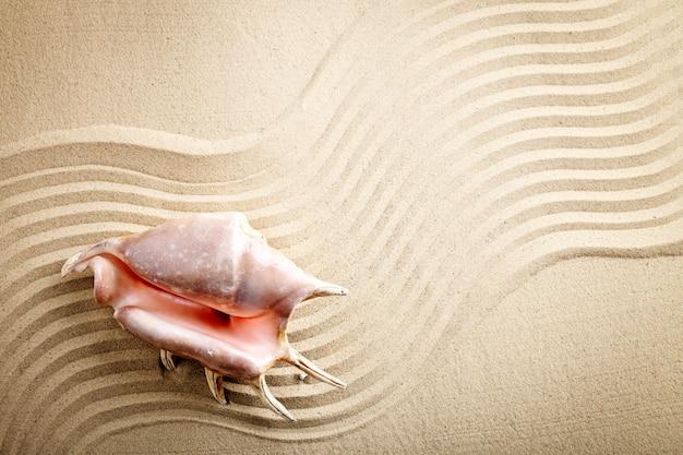 Coquillage sur la plage de la mer. repos d'été.