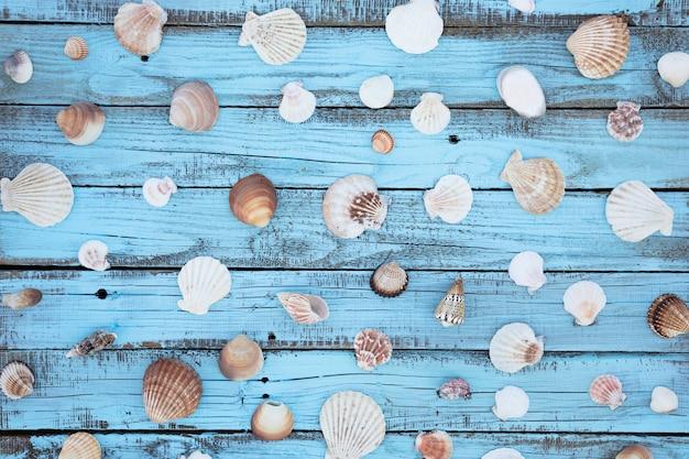 Coquillage plat sur planche de bois