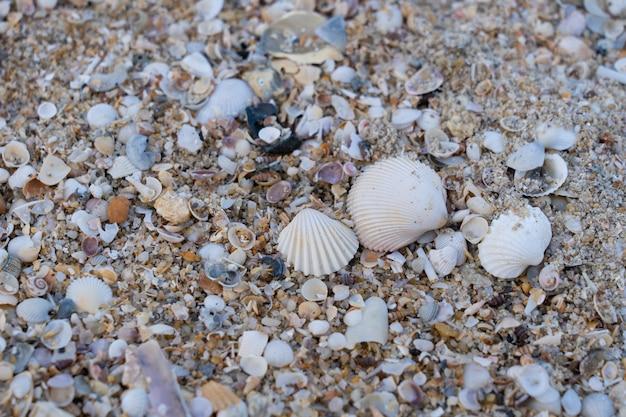 Coquillage sur le sable sur la plage