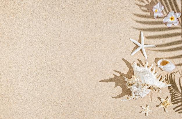 Coquillages blancs et étoiles de mer sur le sable et les ombres des palmiers. fond tropical, espace copie