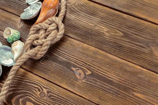 Les coquillages bordent le bois.