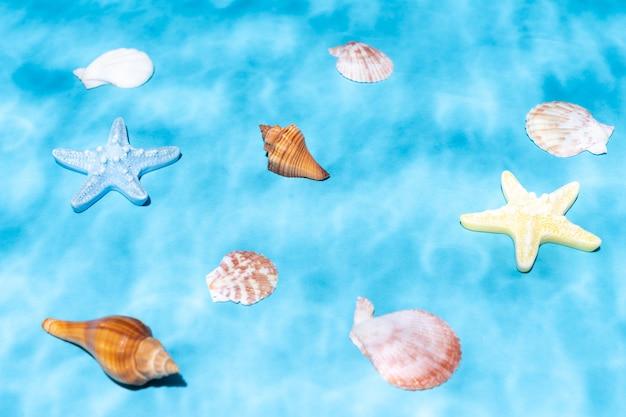 Coquillages et coquilles d'escargots et étoiles de mer sous l'eau