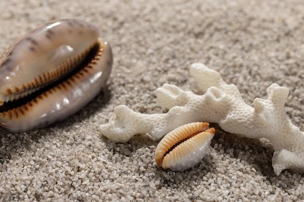 Coquillages dans le sable le concept d'une mer vacances d'arrière-plan avec copie espace libre