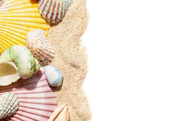 Coquillages dans le sable isolé sur fond blanc, avec copie espace