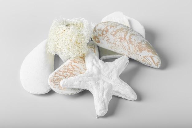 Coquillages décoratifs isolés sur le blanc