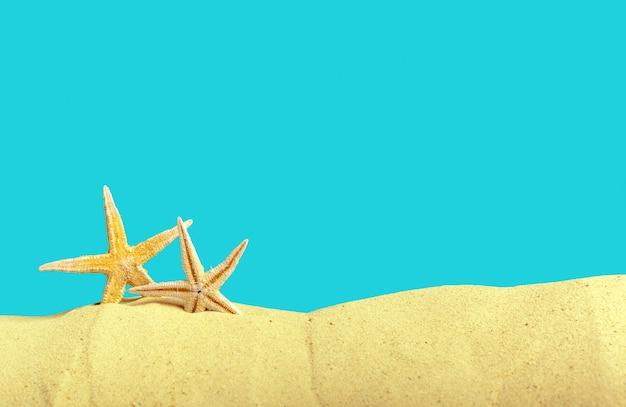 Coquillages étoiles de mer sur le fond de la plage