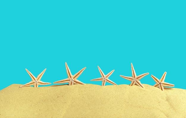 Coquillages étoiles de mer sur la plage