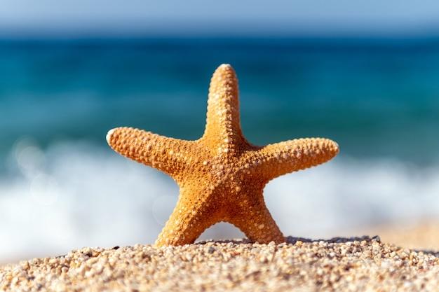 Coquillages étoiles de mer sur le sable au bord de la mer par une chaude journée ensoleillée