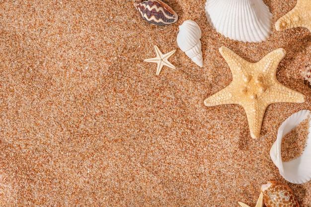 Coquillages et étoiles de mer sur le sable avec espace de copie