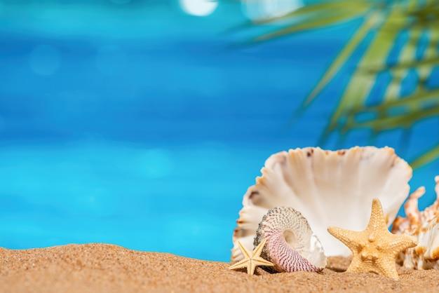 Coquillages et étoiles de mer sur le sable avec fond de mer