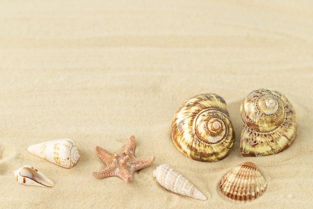 Coquillages et étoiles de mer sur le sable