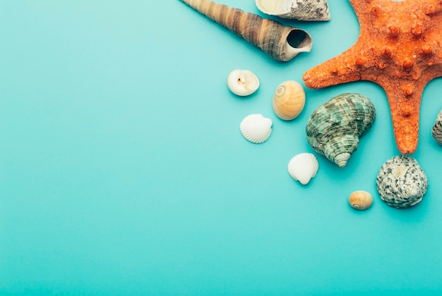 Coquillages sur fond bleu. repos, détente, mer, océan, concept d'été.