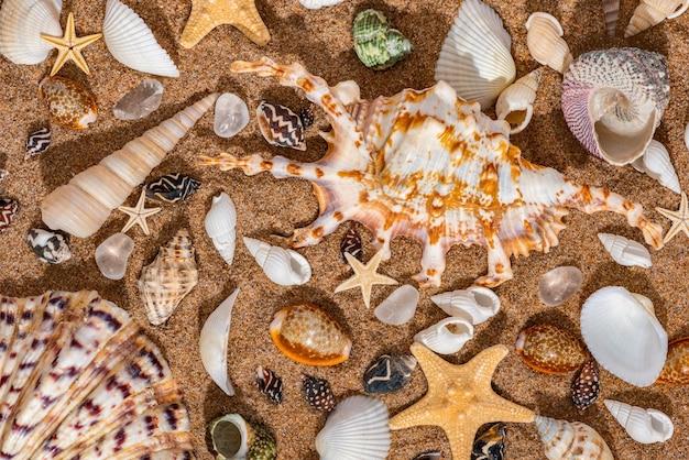 Coquillages en fond de sable