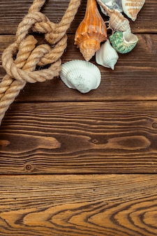 Coquillages frontière sur fond de bois