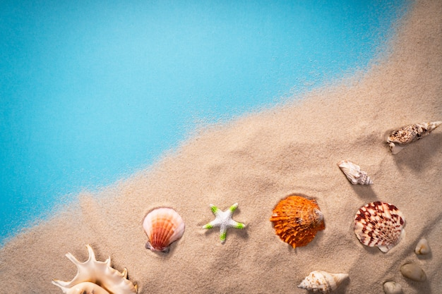 Coquillages, habitat sûr pour la vie marine