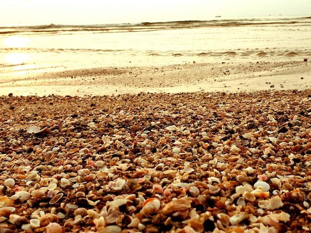 Coquillages mélangés sur le fond de plage