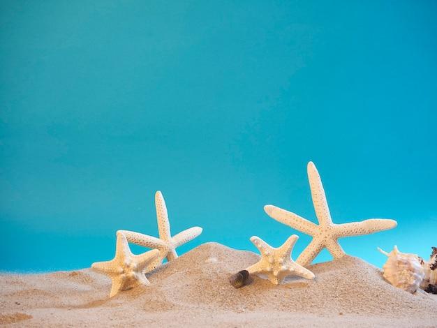 Coquillages sur la plage, fond bleu.