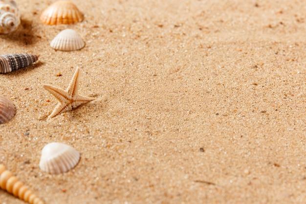 Coquillages sur la plage de sable. fermer et copier de l'espace.