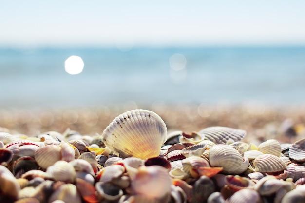 Coquillages sur la plage