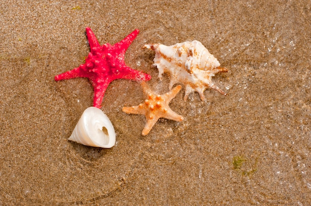 Coquillages recueillis sur la plage de sable tropicale