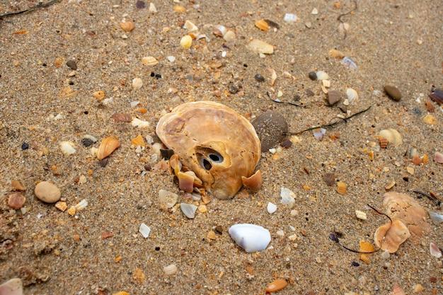 Coquillages sur le sable. fond de plage d'été. vue de dessus