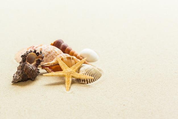 Coquillages sur le sable de la plage