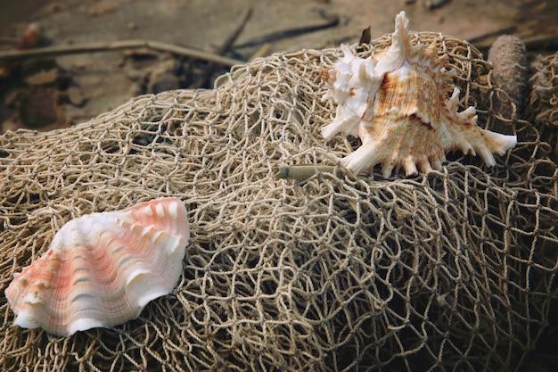 Les coquillages se trouvent sur l'écheveau d'un filet de pêche sur le rivage