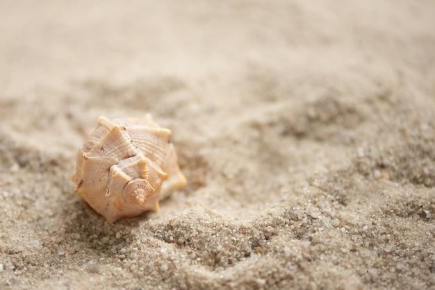 Coquille de conque sur sany beach, fond de vacances d'été