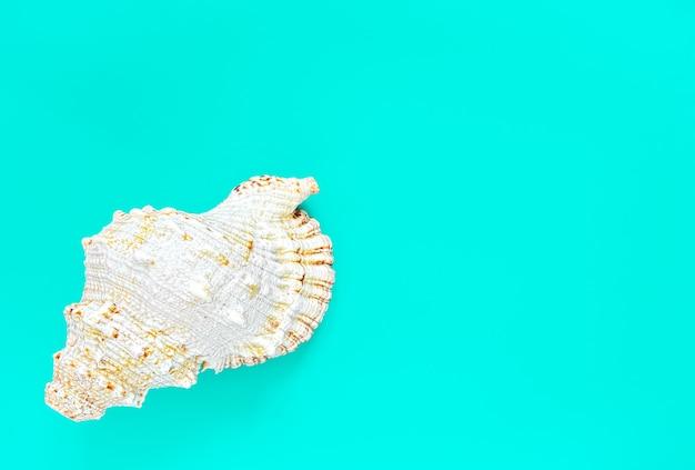 Coquille de malyusk sur surface aigue-marine