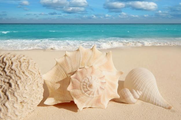 Coquille de mer étoile de mer tropical sable turquoise caraïbes