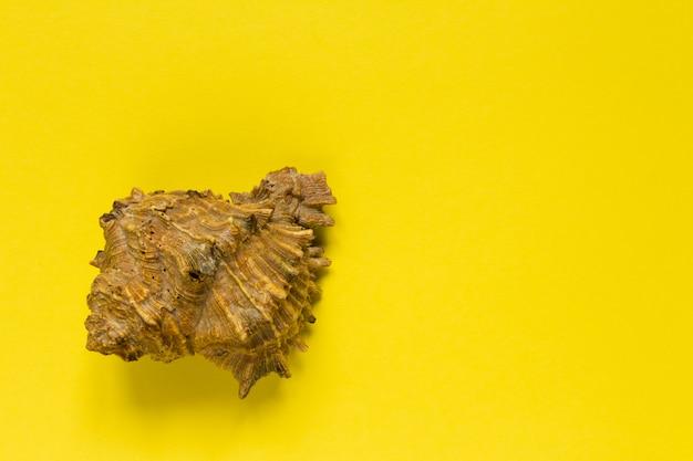 Coquille de mer sur fond jaune