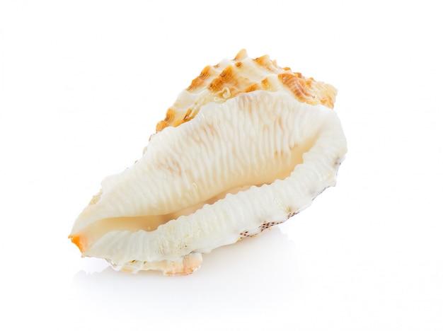 Coquille de mer isolé sur blanc