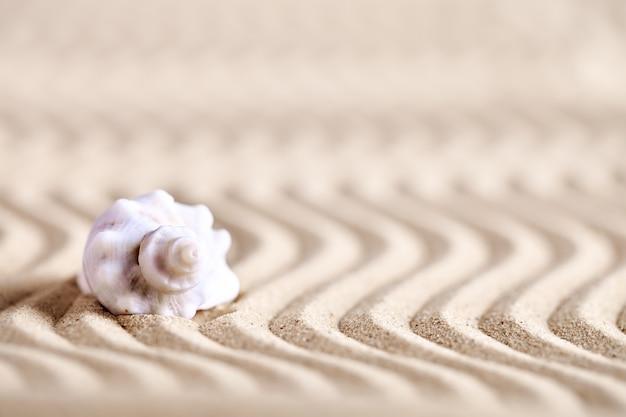 Coquille de mer sur la plage de la mer. repos d'été.