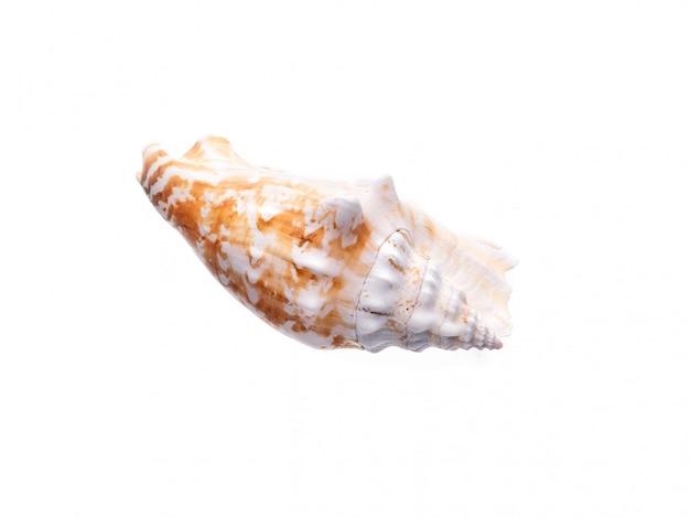 Coquille naturelle de la mer, forme originale de la vie marine. abri de sécurité pour isolat blanc de mollusques et crustacés.