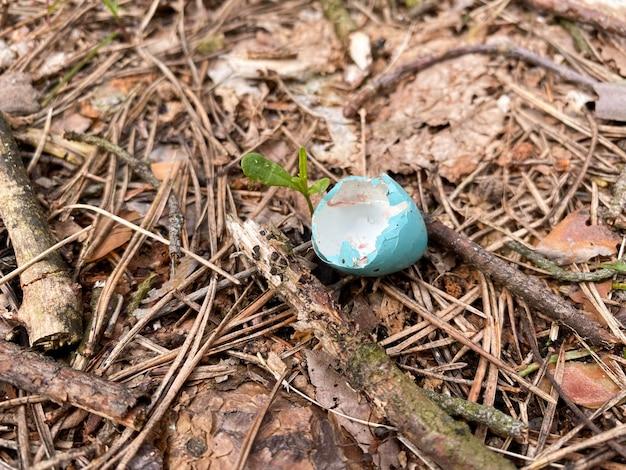 Une coquille d'oeuf de couleur bleue se trouve au sol dans la forêt
