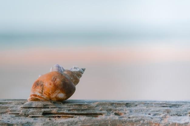Coquille séchée sur le vieux bois et carie avec flou fond de ciel et mer bleu.
